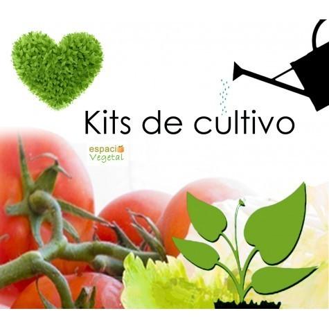 Jardines verticales modulares macetas textiles huertos for Plantar pimientos y tomates