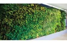 Jardines verticales para fachadas espacios interiores o for Pockets jardin vertical