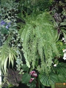 jardines verticales5