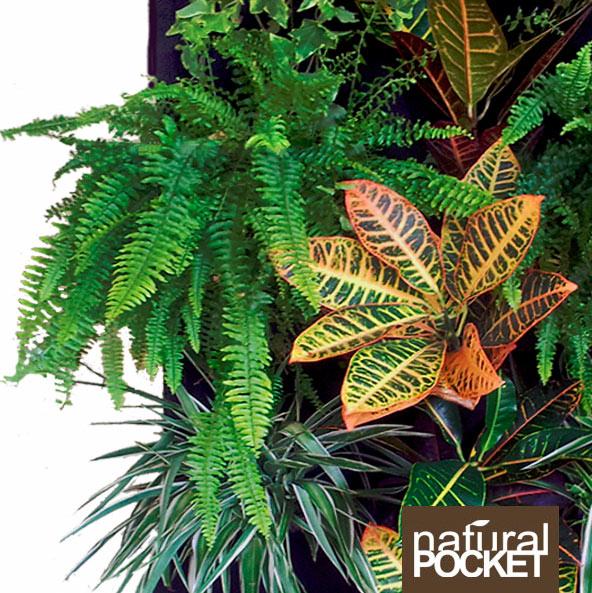 Recibe tu muestra de natural pocket espacio vegetal for Pockets jardin vertical