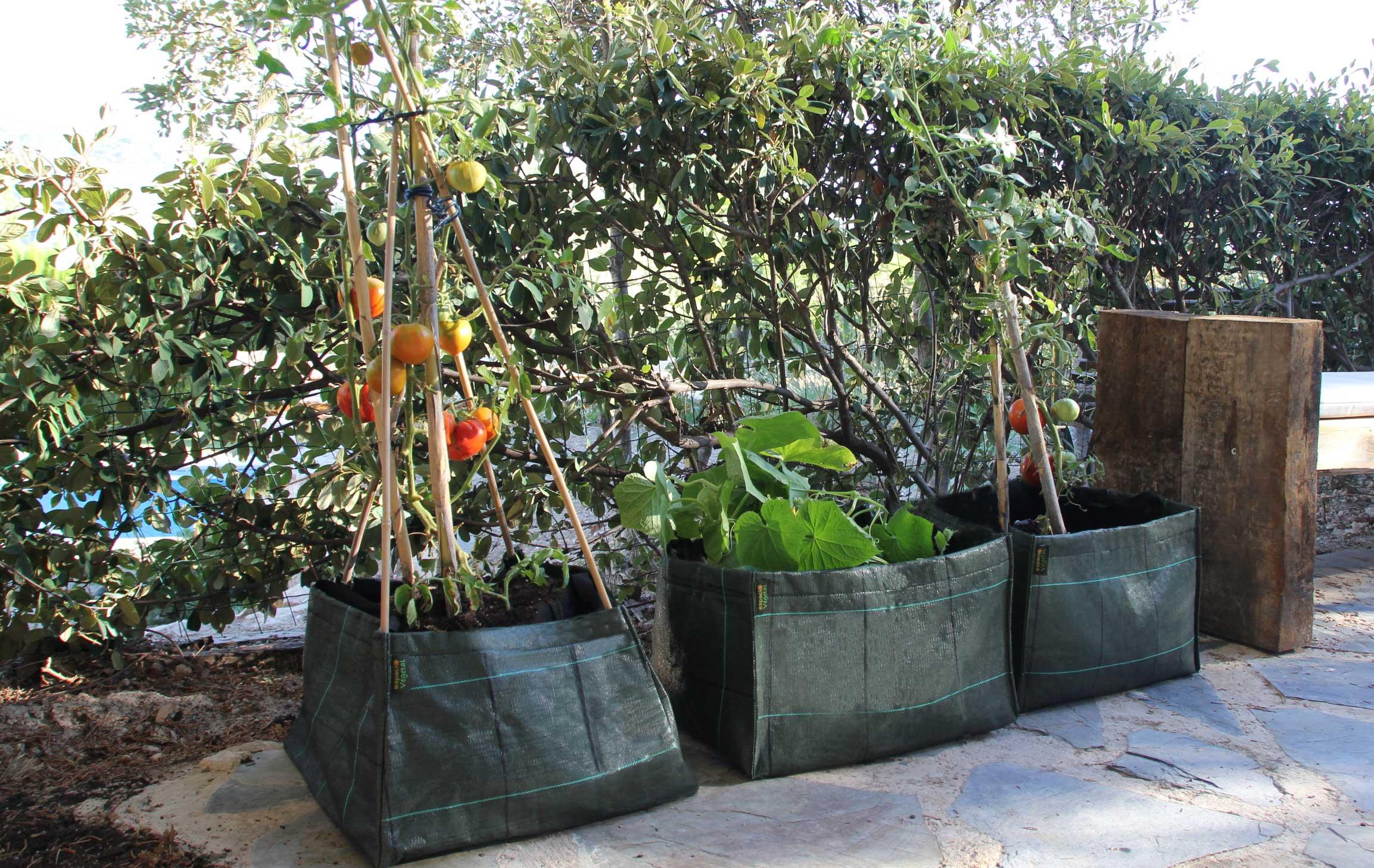 Macetas de tela para sembrar hortalizas y frutas espacio - Huerto para principiantes ...