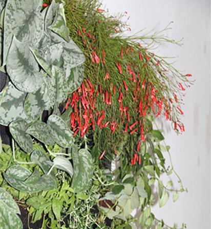 instalación de jardines verticales para interior